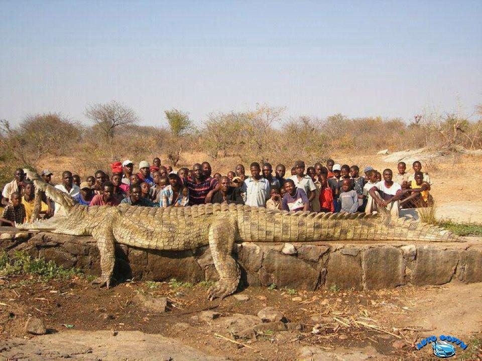 Angola_D2QV_Monster-Crocodile.jpg